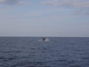 クジラ&色々