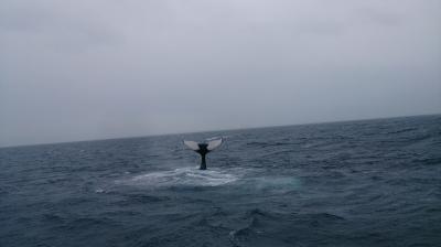 ☆ クジラ 2 ☆