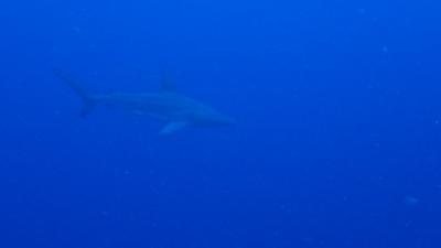 サメ・カメ
