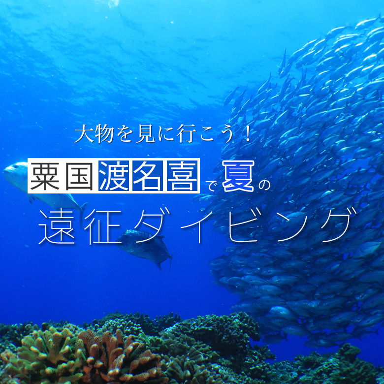大物を見に行こう!粟国・渡名喜島で夏の遠征ダイビング