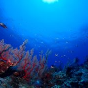 透明度40mオーバーです。沖縄|慶良間諸島