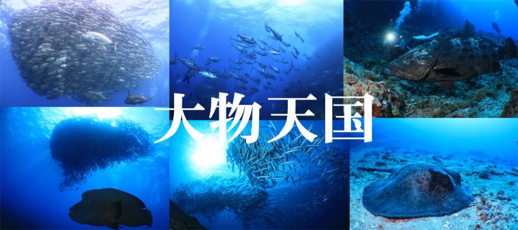 粟国・渡名喜遠征ダイビング