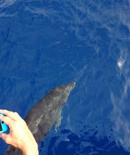 イルカが遊んでくれましたよ!沖縄ダイビング|慶良間