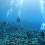 水中のぼせます(笑) 沖縄慶良間/体験