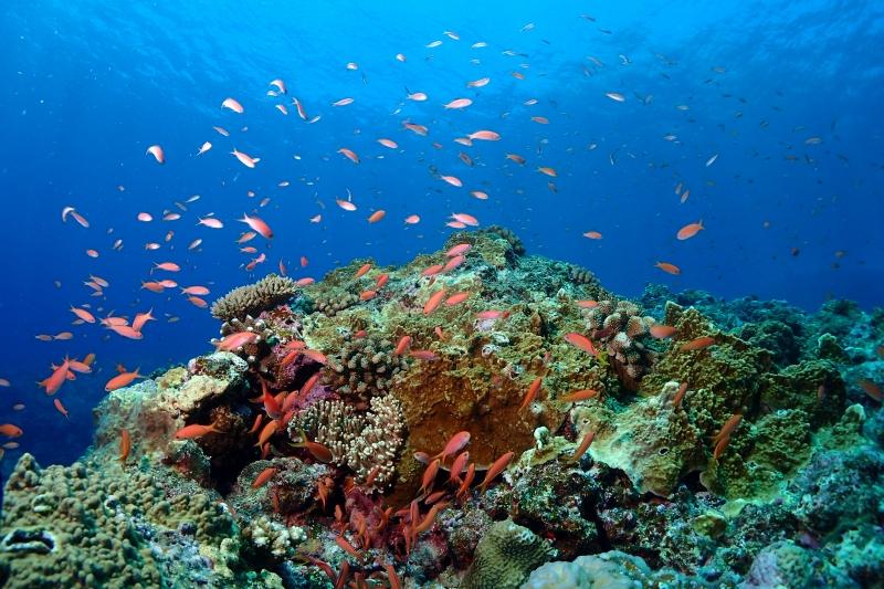 本日も渡名喜遠征 |沖縄ダイビング