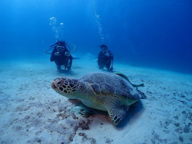 万座で盛りだくさんダイビング。沖縄ダイビング