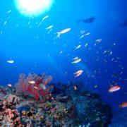 慶良間でカメラ練習 沖縄|ダイビング