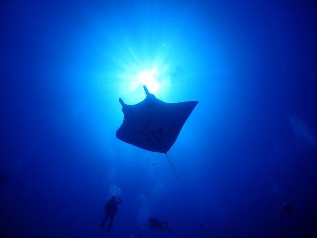 慶良間でマンタに会えました。慶良間ダイビング|沖縄