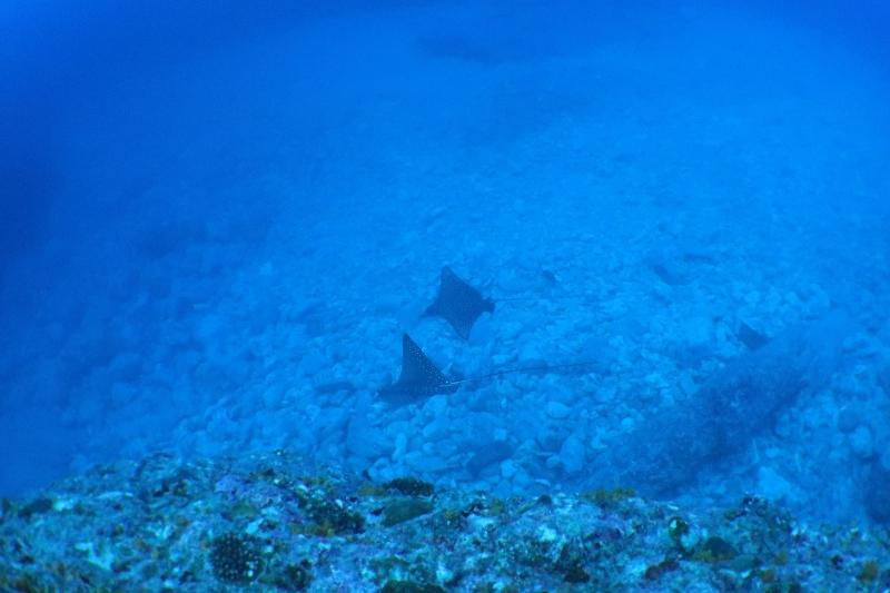 2つの台風明けで慶良間へ! 沖縄|ダイビング