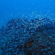 陸も海も秋突入です。 沖縄ダイビング/慶良間ファン
