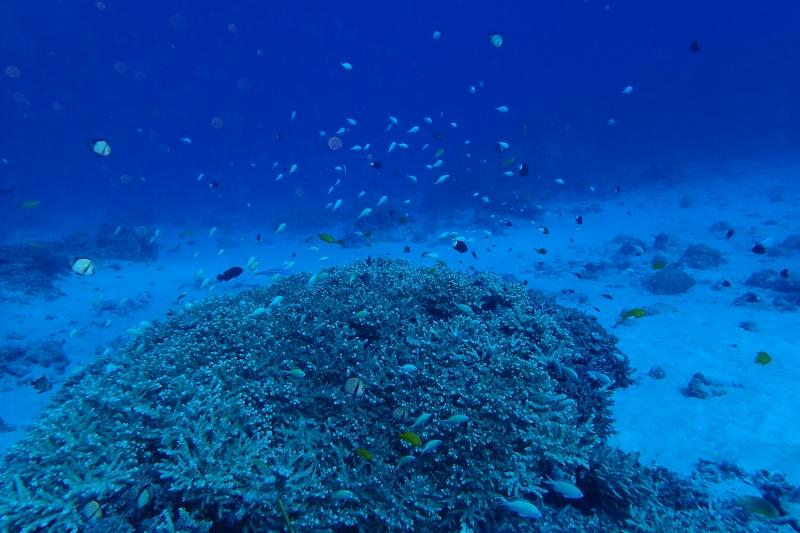 連日ナイスな日々です!! 慶良間ファン/沖縄ダイビング