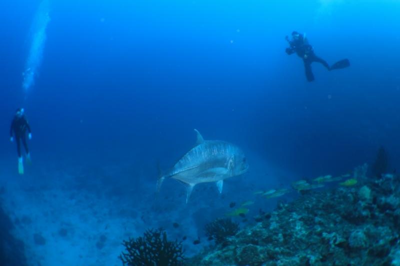 午後から万座へ! 沖縄ダイビング|万座