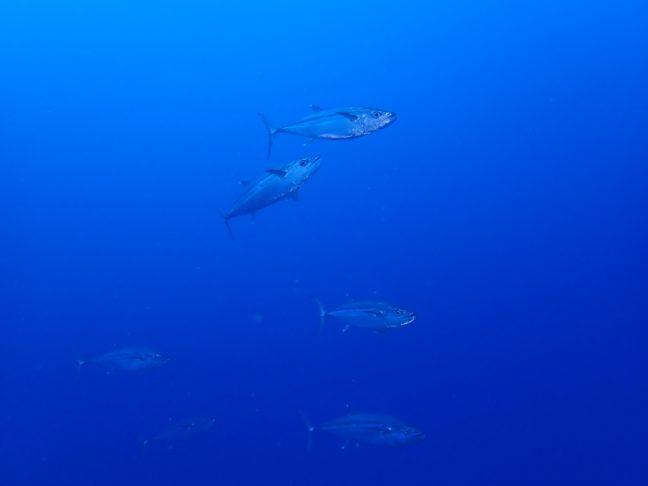 到着後チービシでダイビング! 沖縄|那覇市ダイビングショップバグース
