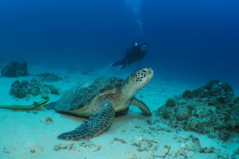 午後から万座でダイビング 沖縄|那覇市ダイビング