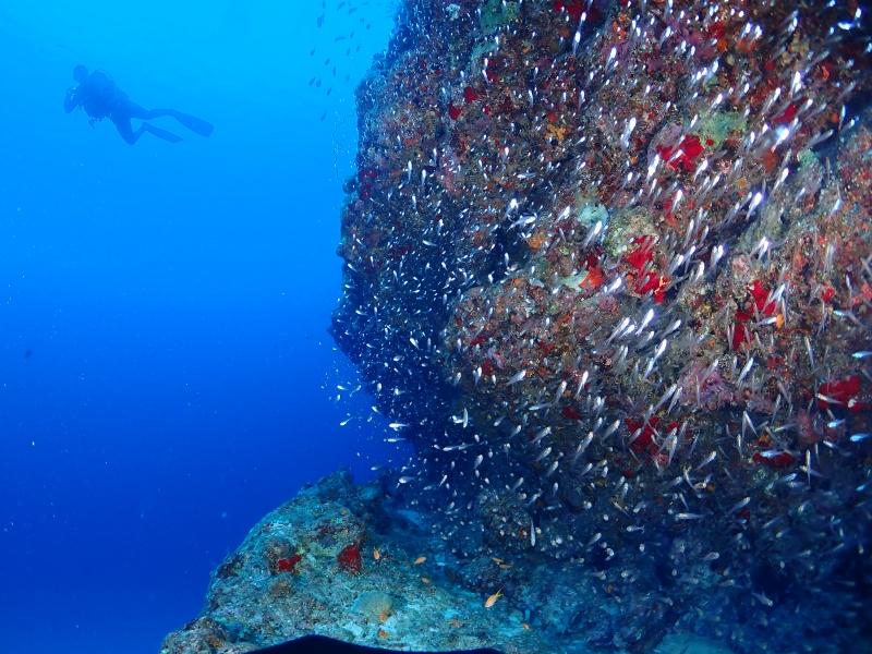 水中生物群れ