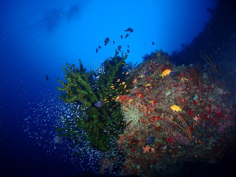 水中サンゴ