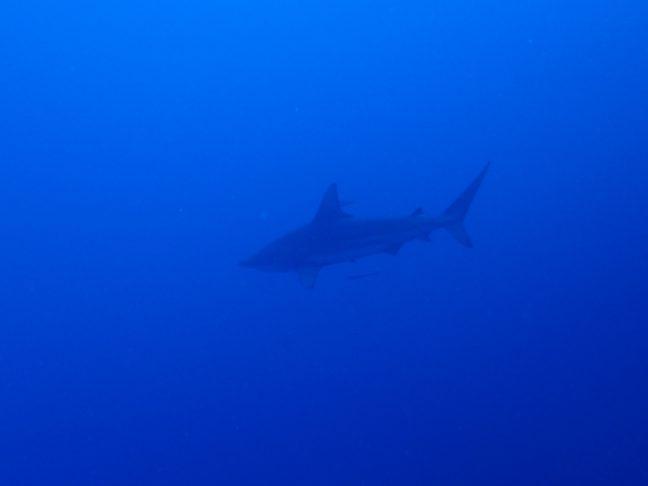 万座でダイビング 沖縄|那覇からダイビング