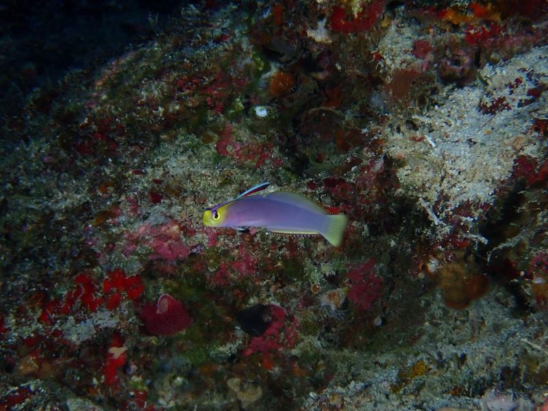 沖縄の水中生物