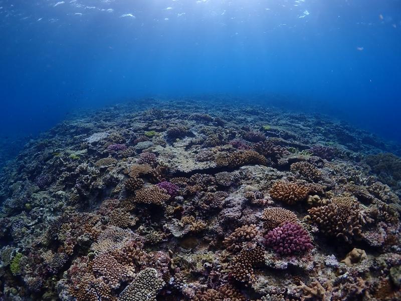 沖縄万座のサンゴ礁