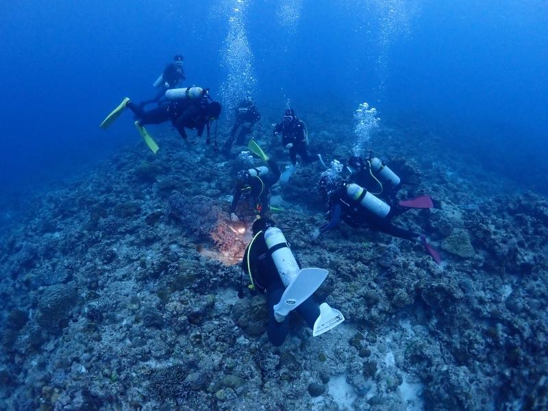 ウミガメ観察中ダイバー