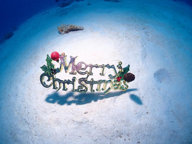 水中クリスマス