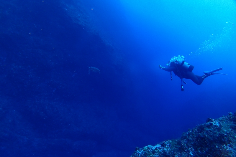 ダイバーとウミカメ