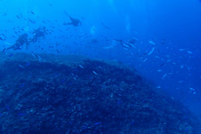 ダイバーと魚の群れ