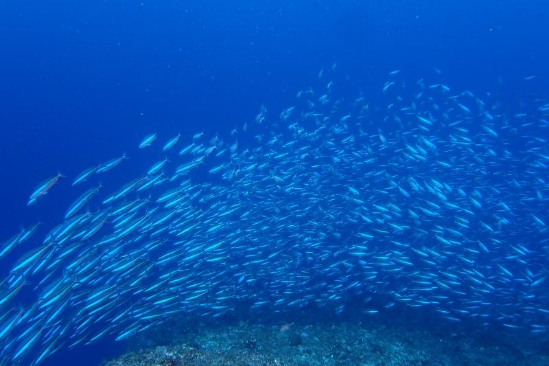 沖縄の魚影