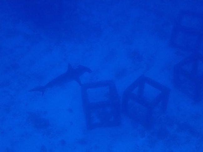 ハンマーゲット!沖縄本島ダイビング