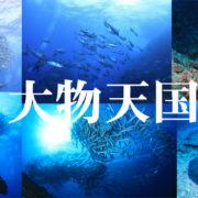 2019年粟国・渡名喜遠征開催決定!