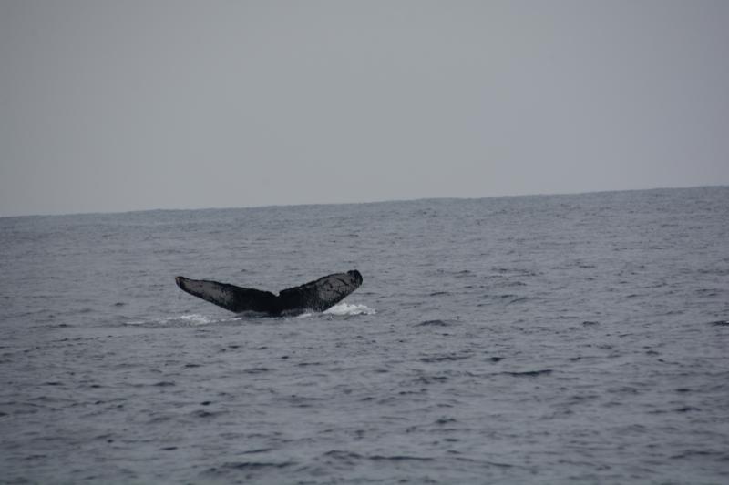 沖縄のZクジラ