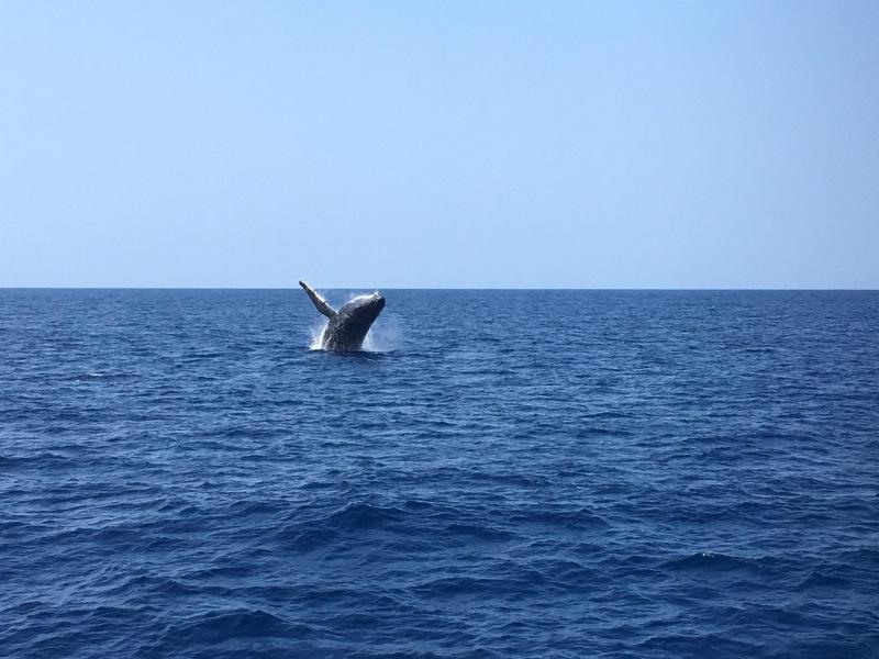 クジラのブリーチ