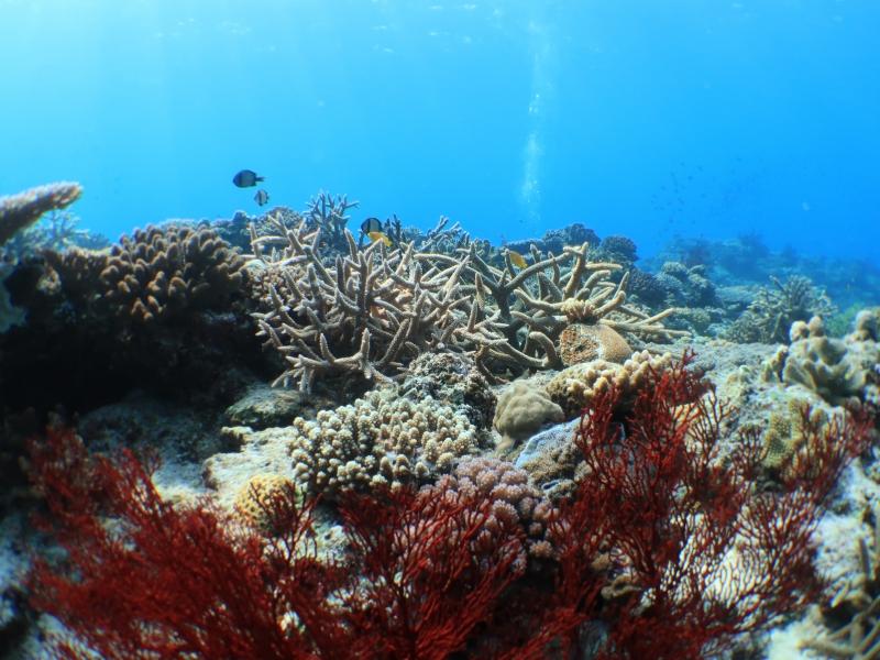 沖縄のサンゴ礁