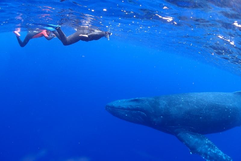 クジラとスノーケル