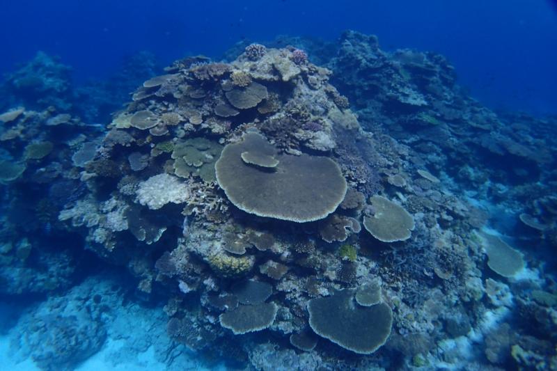 マンツーマンで体験ダイビング!  沖縄|ダイビング