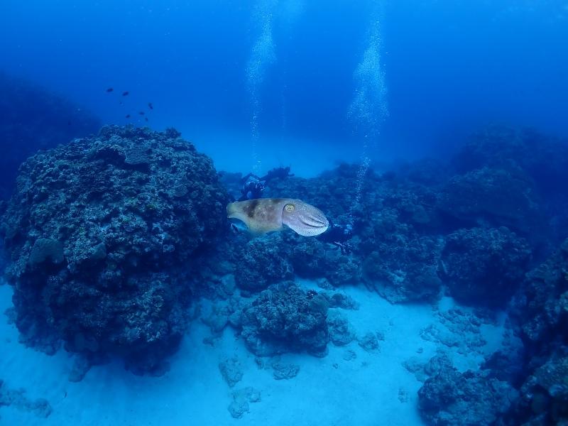 沖縄のイカ