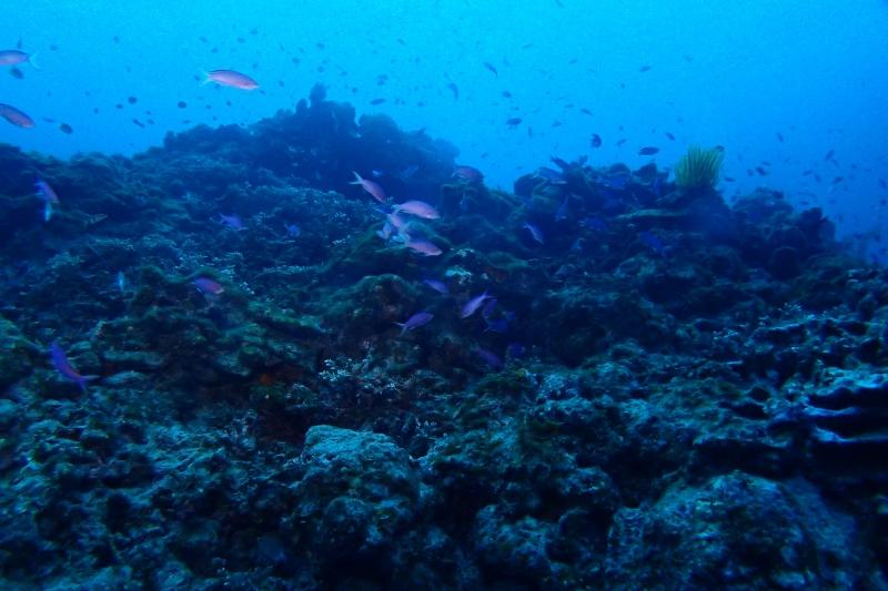 沖縄の魚の群れ