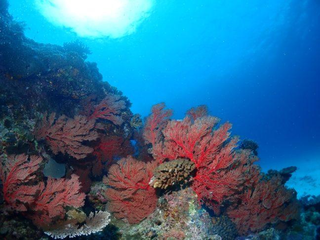 PMファン  沖縄|ダイビング