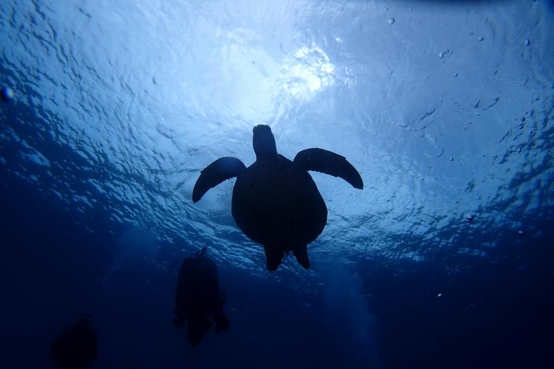 沖縄のダイバーとカメ