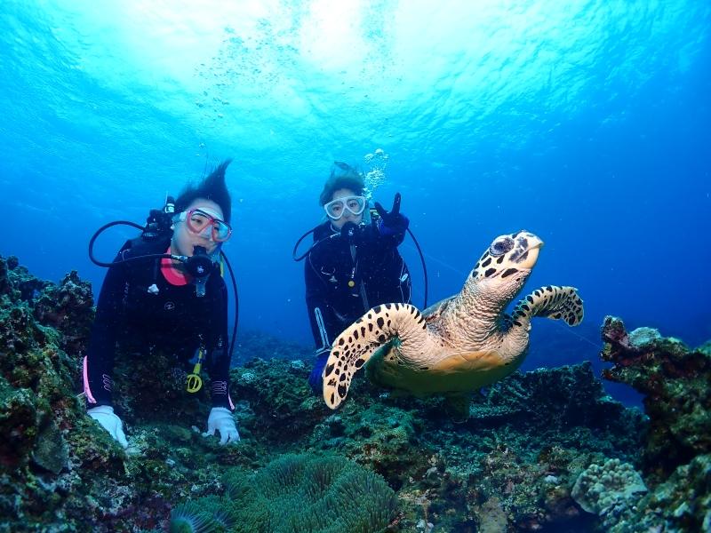 ウミガメとダイバー