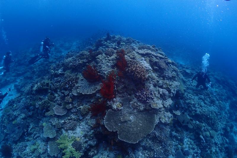 沖縄の水中