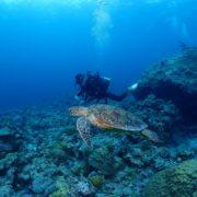 チービシを満喫  沖縄|ダイビング