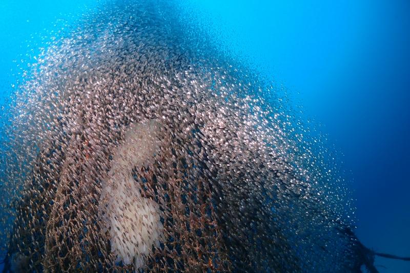調査ダイビング!  沖縄|ダイビング