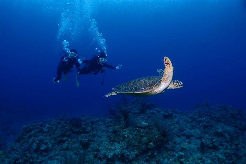 慶良間体験ダイビング~!  沖縄|慶良間