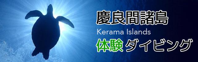 慶良間諸島体験ダイビング