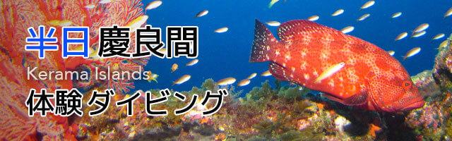 半日慶良間諸島体験ダイビング