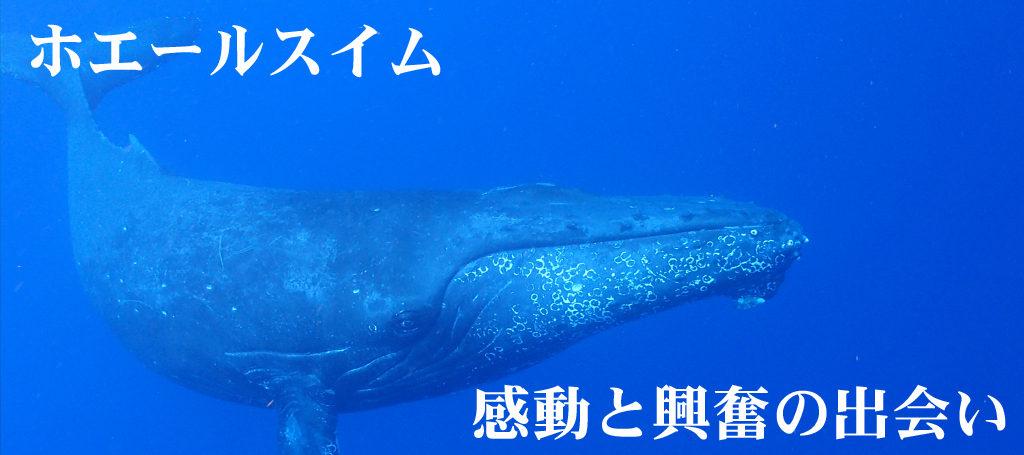 沖縄でホエールスイム開催
