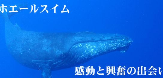 沖縄ホエールスイム