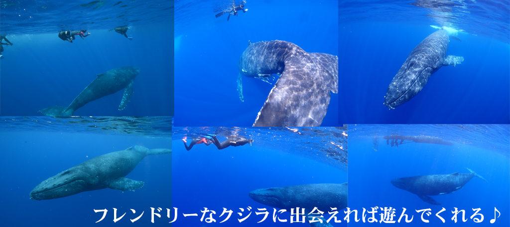 沖縄でクジラに大接近