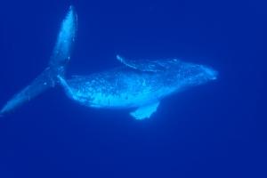 リラックスするクジラ